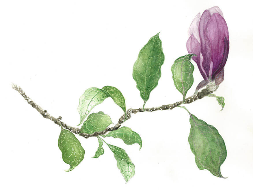 Botanical Theme Workshop