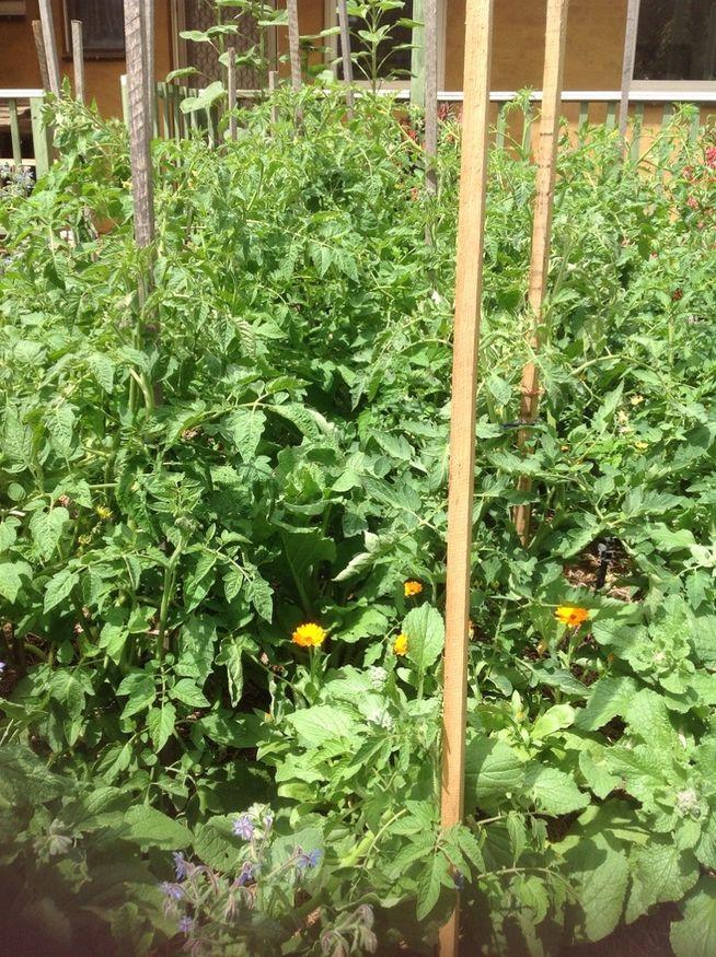 Gardening Extravaganza 2