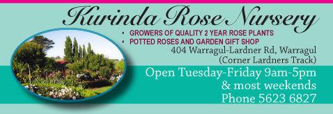 kurinda rose nursery