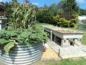 Doug and Alene's Garden