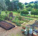 Lillico Food Garden