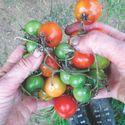 Organic Vegie Gardening & Compost Making Demonstration